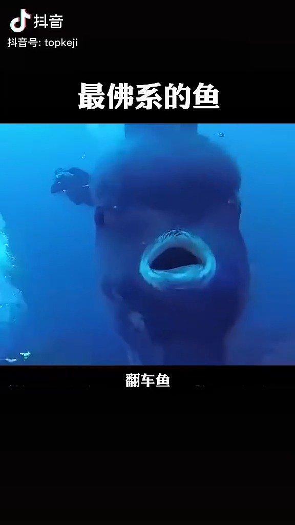 原来翻车鱼是这个样子的