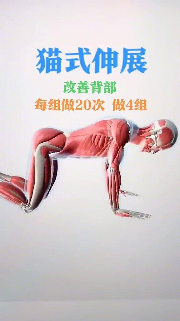 猫式伸展,改善背部不舒服,久坐可以多做做这个动作