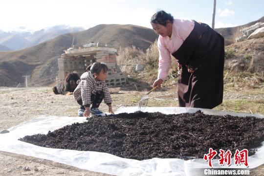 公益扶贫项目助青海玉树藏族妇女