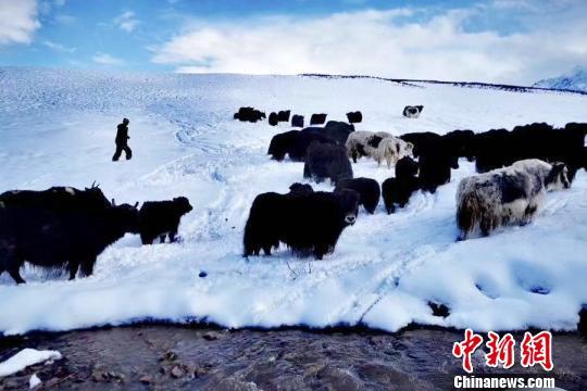 青海门源日降水量突破1961年以来