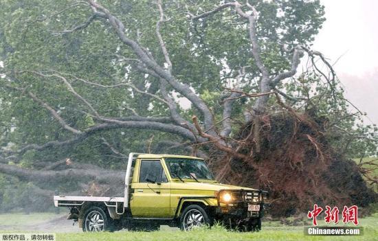 """当地时间3月17日,飓风""""马库斯""""袭击澳大利亚达尔文,狂风大作树木被连根拔起。"""