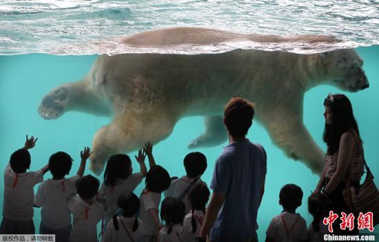 """资料图:2018-05-22,新加坡动物园内,""""""""伊努卡""""在水池里畅游。"""
