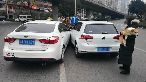 女子开车照顾狗儿 一不留神发生交通事故九龙坡交巡警:开车带宠物 这五条忠告不看要后悔!