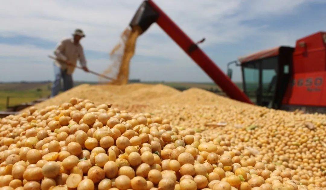 捕鱼达人:看到中国的这个巨大商机后_巴西农户把甘蔗都砍了