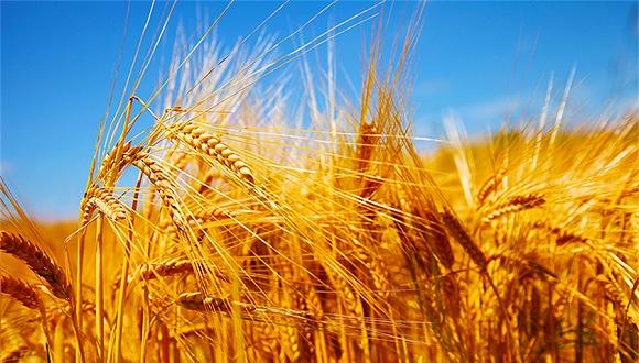 农业农村部部长:中国成功解决了14亿人的吃饭问题
