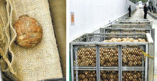 資料圖:混入馬鈴薯中的手榴彈 (香港《明報》)
