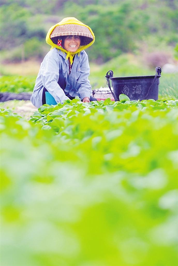 见证海南冬季瓜菜基地成长 岛外经销商的海南瓜菜情