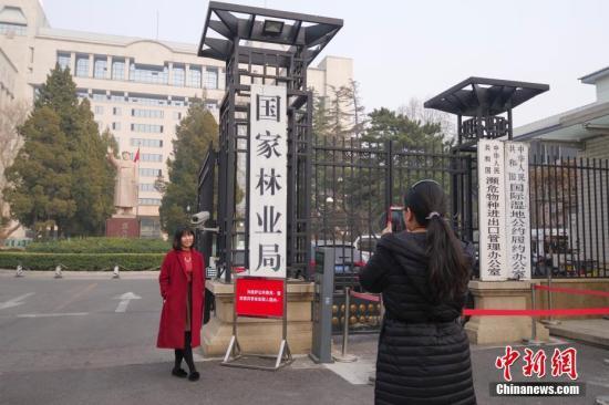 3月13日,民众在国家林业局正门拍照留念。中新社记者 贾天勇 摄