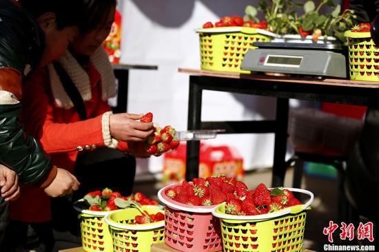 资料图:草莓。中新社发 富田 摄