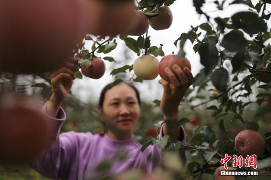 财政部等四部门推动农业保险高质