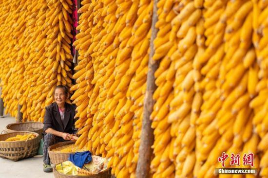 农业农村部:粮食价格基本稳定有望再迎丰收年