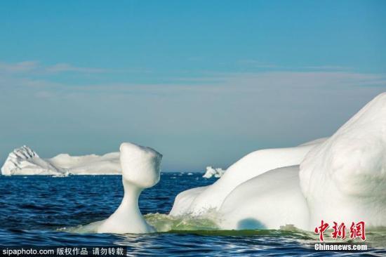 <b>致命病毒侵袭海洋哺乳动物 原因或是冰川融化?|哺乳动物</b>