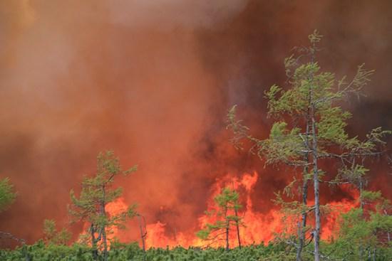 呼中自然保护区内的大火。于珂/摄