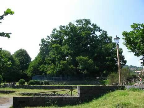 世界排名十大古树,崖柏到底排第几?