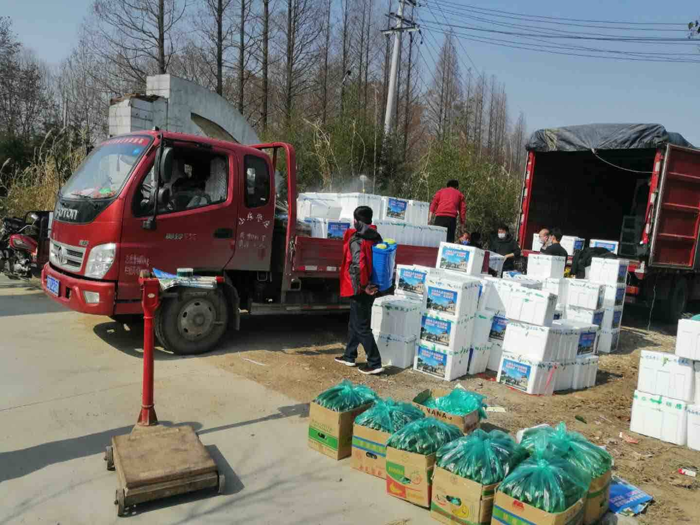 枣庄台儿庄马兰屯镇南洛村采摘2万斤黄瓜送往武汉