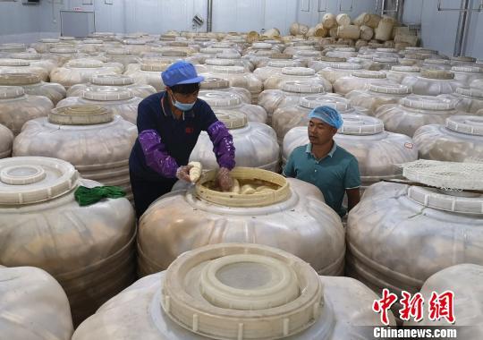 工人在查看酸笋的腌制情况。 朱柳融 摄