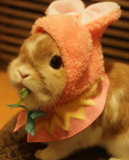 花脸兔兔超萌,吃东西的时候最可爱