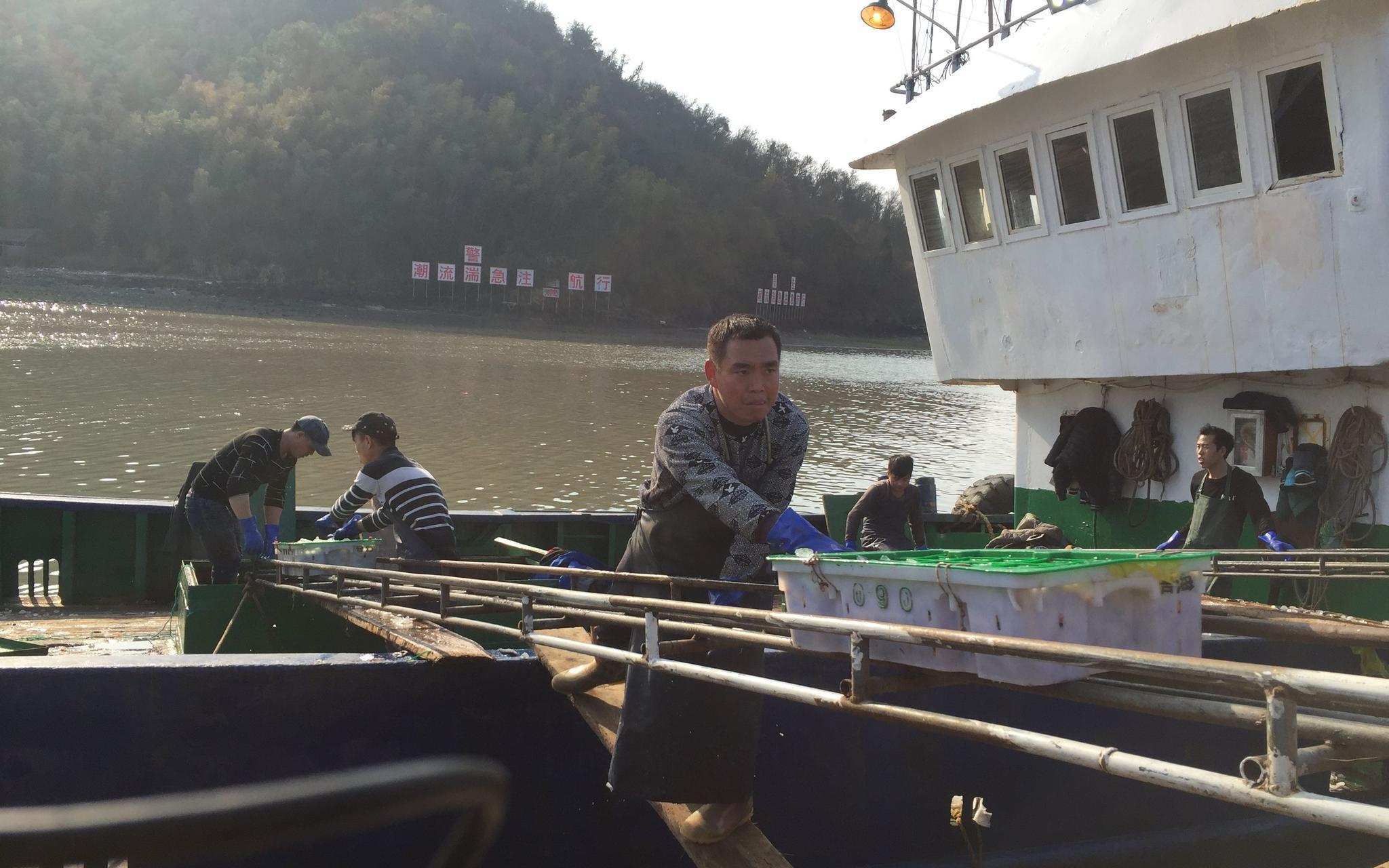 东海复渔工作全面推进 200余艘渔船出海工作图片