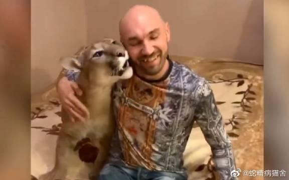 亚历山大下班回家,美洲狮梅西见到粑粑很开心对他撒娇亲亲蹭蹭