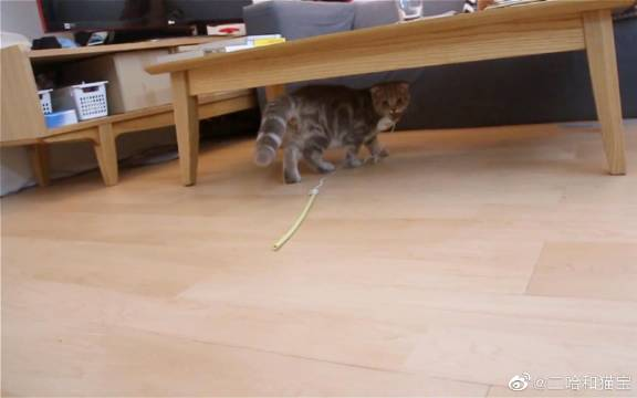 【Suri & Noel萌喵一家】玩具是我的!