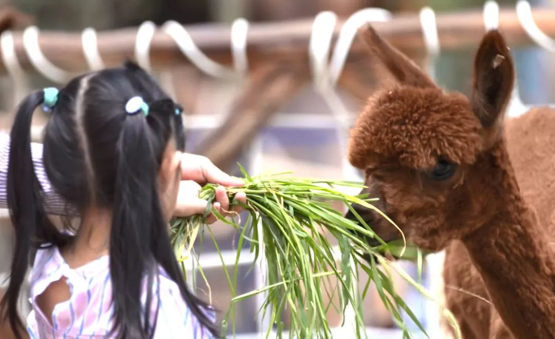 福建永鸿野生动物世界开园倒计时!福清宝贝们暑假又一