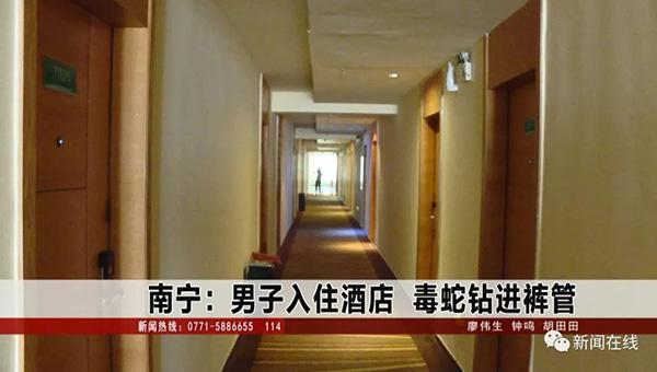 男子入住酒店致电前台求助:裤管掉出条银环蛇