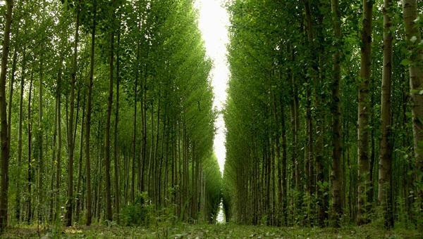 林草局:建两千万公顷储备林 2035年一般用材自给金瓶酶之全集