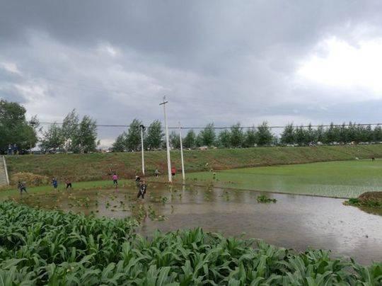 图3:三善堂临时垃圾堆场旁边不远处稻田插秧