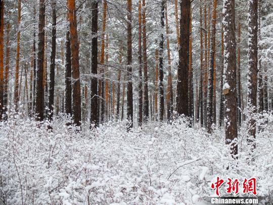 """中国""""北极""""漠河四月暴雪倾城"""