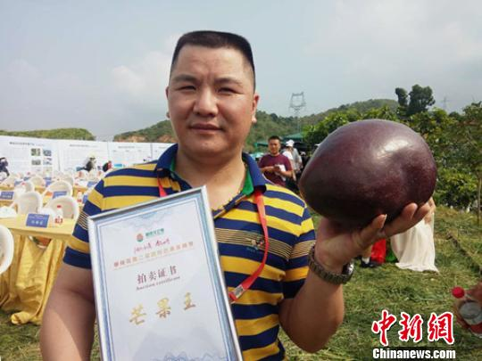 """攀枝花6斤重""""芒果王""""高价拍得11.26万元(图)"""
