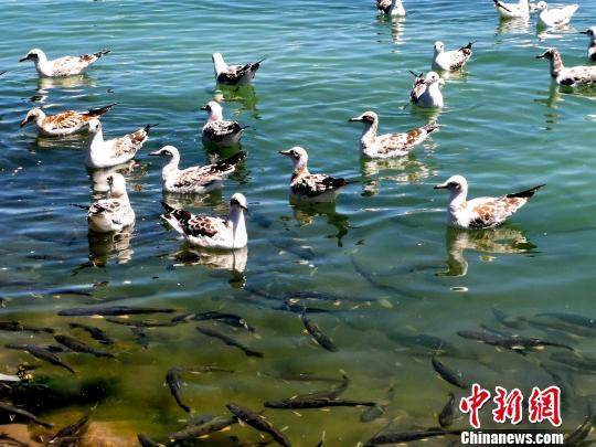 http://www.edaojz.cn/qichexingye/274265.html