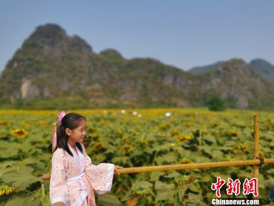 """国庆假期,位于桂林七星区马家访村的百余亩背日葵怒放,吸收浩瀚外埠旅客战市平易近旅游赏识,一位身脱汉服的小女孩正在""""花海""""中留影。 张超群 摄"""