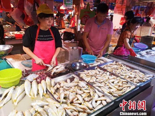 """广东侨乡台山黄花鱼被分为""""仲仔""""和""""黄皮头"""""""