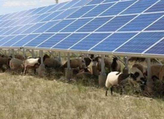 为了这个世界难题,中国在发电站放了几千只羊,就这样解决了