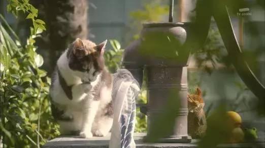 更有猫狗共处的祥和画面,不管你是猫派照样狗派都能被治愈。