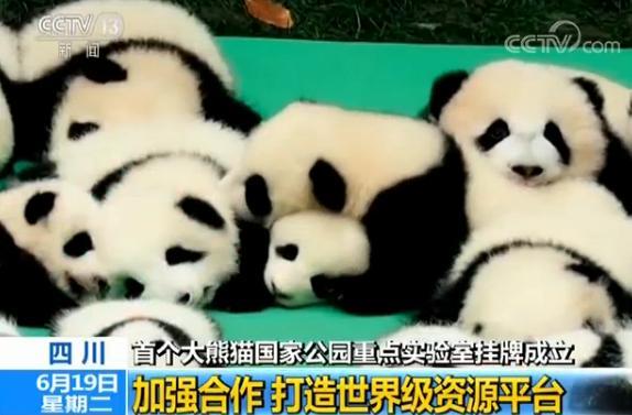 大熊猫国家公园重点实验室挂牌成立|野生动物|大熊猫