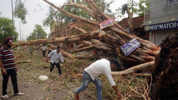 印度沙尘暴灾害致100多人死亡 树木被连根拔起