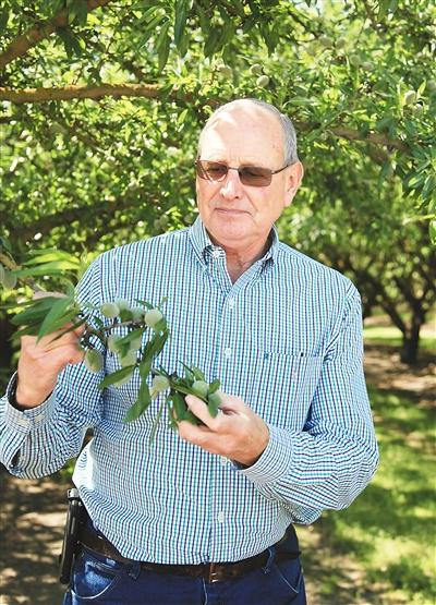 """4月25日,巴旦木种植业者菲彭热情地带着记者参观了他与四位合伙人共同拥有的位于加州莫德斯托地区的巴旦木种植园和加工厂。根据加州食品和农业部门的数据,该州2016年巴旦木出口额达45亿美元,是该州第一大农业出口产品。""""我们家已经四代种植巴旦木,我一辈子都在这个行业工作,我们视中国市场为巨大机遇,""""菲彭对记者说,""""回头看看过去5年,中国市场没有令我们失望。""""图为巴旦木种植业者菲彭展示初步成形的巴旦木果实。 新华社记者 高 山摄"""
