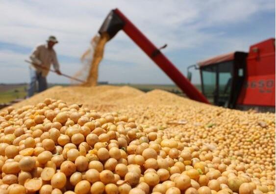中国若用大豆反击,美国一年损失900亿(资料图)