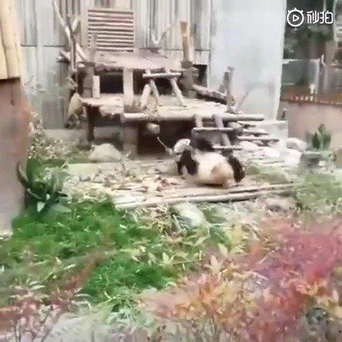 功夫熊猫:这门票都买了,肯定不让你们吃亏