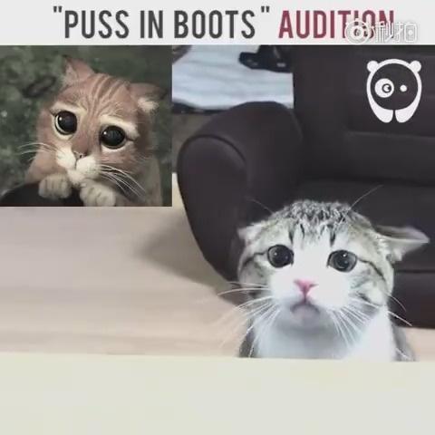 萌哭了,动画片诚不欺我,原来猫咪真的可以这么可爱的,神同步