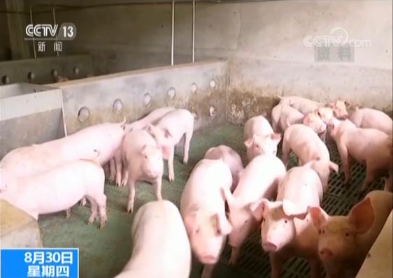 农业农村部:已有效控制四起传入猪瘟疫情