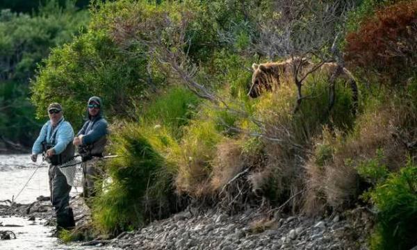 美国两名男子正在钓鱼,浑然不知身后站着一头大棕熊