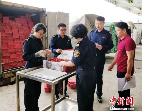南宁海关对8批不合格越南进境鲜辣椒做退运处理