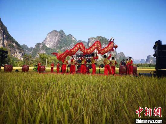 11月8日,广西大新明仕田园景区举行首届金秋丰收节。供图