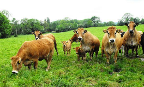 """""""中澳之间的紧张关系正在威胁牛肉对华出口!"""""""