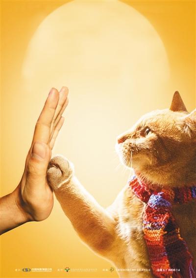 《流浪猫鲍勃》凭借萌宠成票房黑马