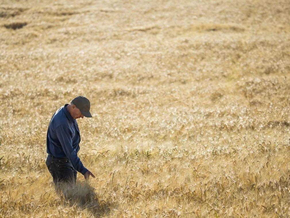 ▲美国农民成为中美贸易战的牺牲品。(视觉中国)