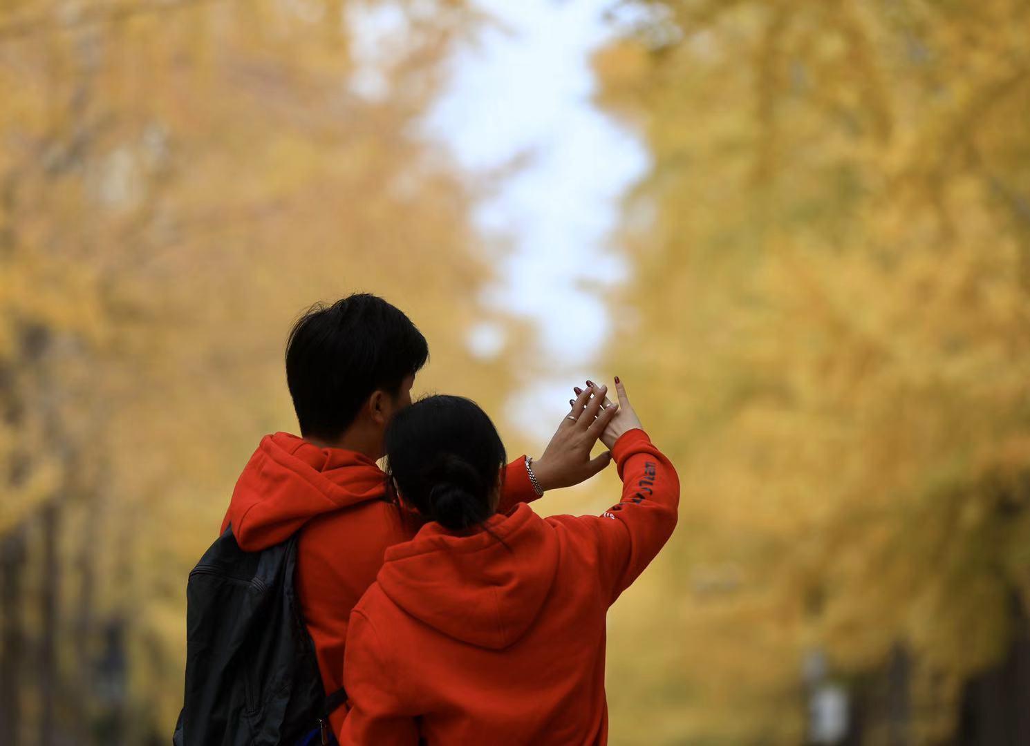 抓住秋的尾巴,来圆明园千米银杏大道