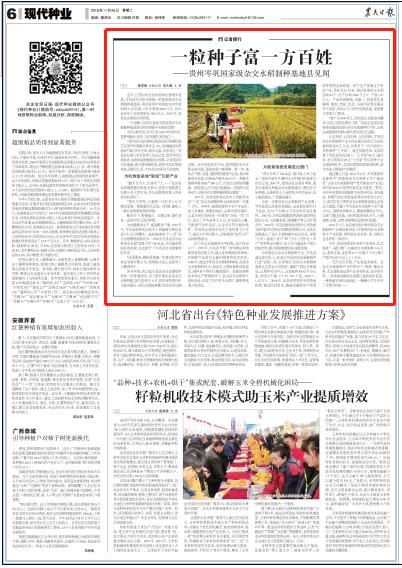 央媒看贵州丨一粒种子富一方百姓 ——贵州岑巩国家级杂交水稻制种基地县见闻
